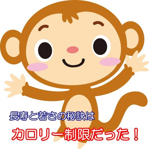 猿の長寿の秘訣
