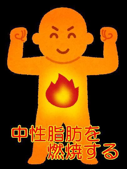 中性脂肪を燃焼